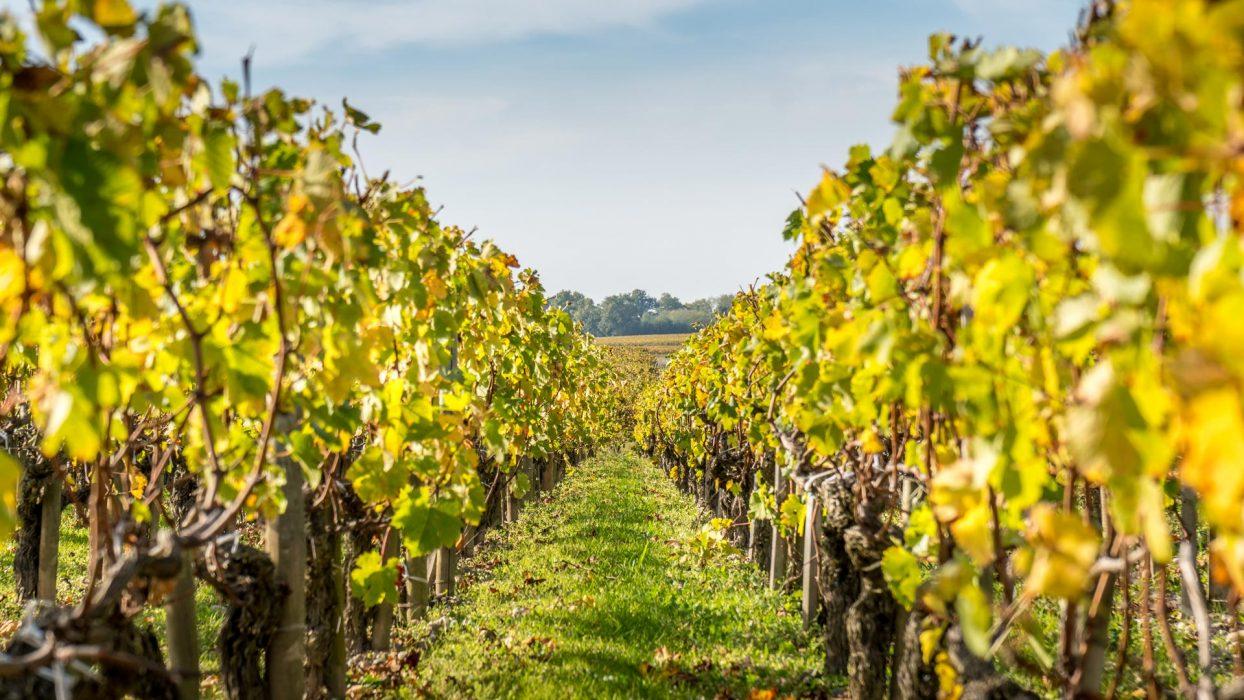 Ferienwohnung und Weingut Kappes Bernkastel-Kues Weinberge