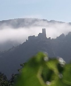 Ferienwohnung und Weingut Kappes Bernkastel-Kues - Burg Landshut im Nebel